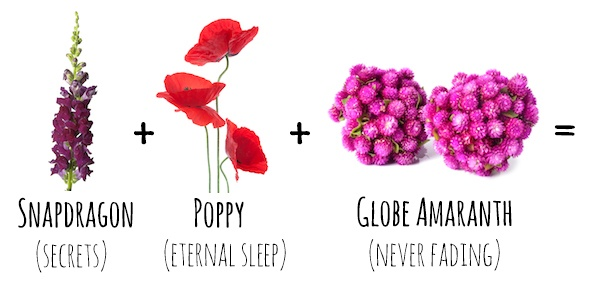 Flower Meanings  Snapdragon   Poppy   Globe Amaranth