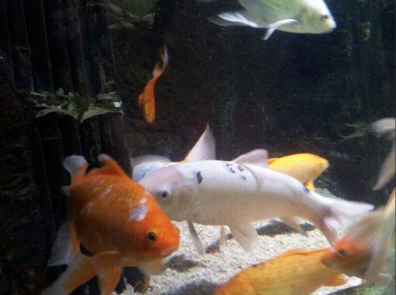 pisces en aquario