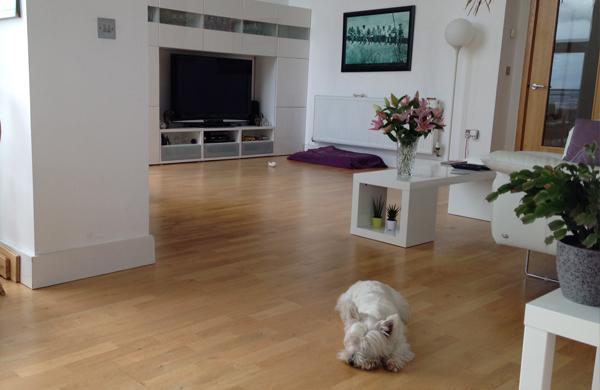 A dog inside an Airbnb Belfast apartment