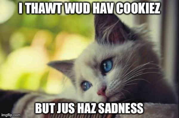 six-meme-animals-review-little-hurricanes-top-songs_sadcat_600c396