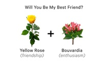 Flower Meanings: A Guide to Letting Your Bouquet Do the Talking