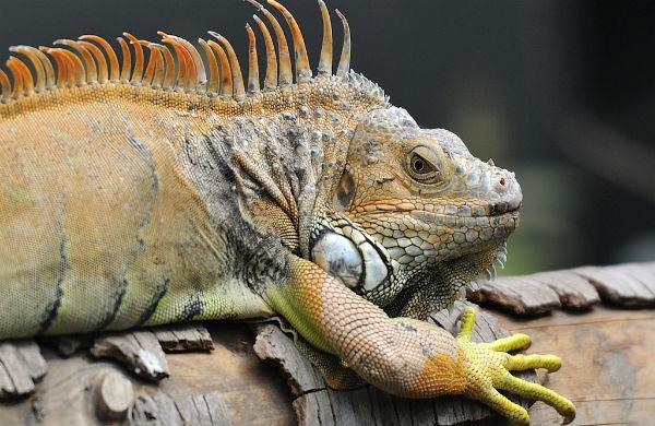 Zoo de Vincennes ©Rog01