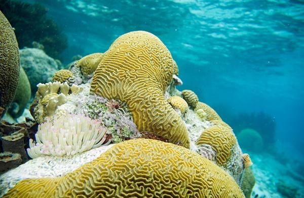 Top Six Places to Snorkel Bonaire