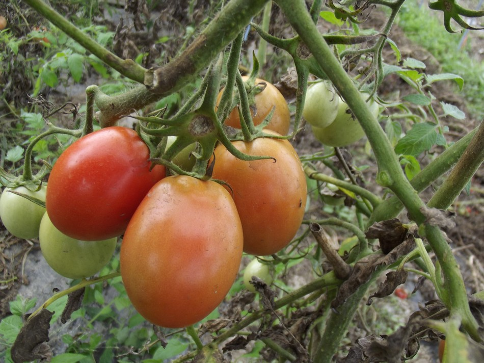 pomodori Pianalto