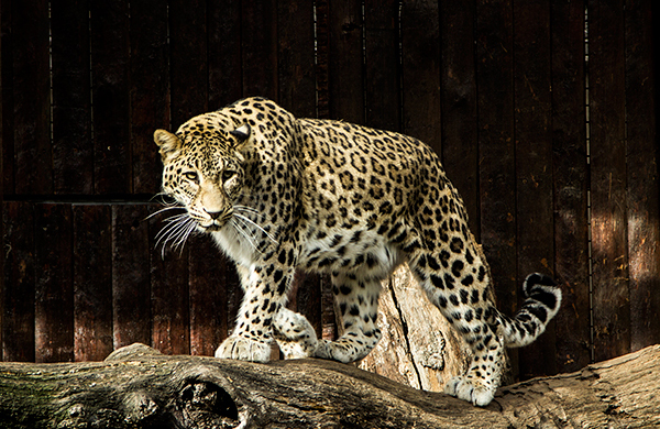 Zoo de Madrid: información y horarios