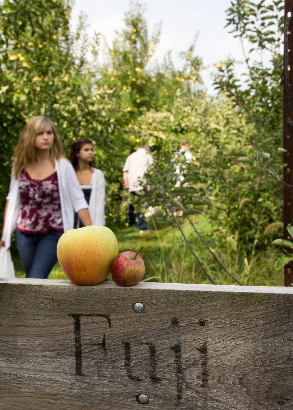 Five-Orchards-for-Autumn-Apple-Picking-Near-Chicago_countyline_600c841