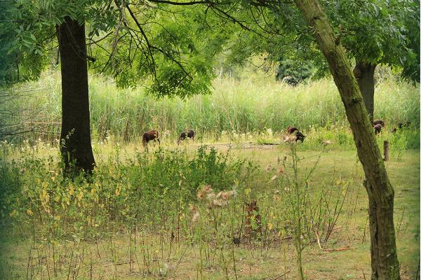 Die Hasenheide in Berlin - Viel mehr als Drogenumschlagplatz