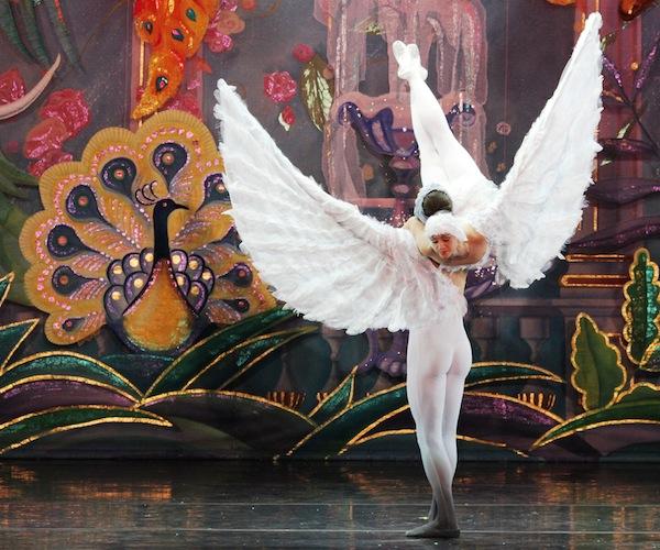 ballet-etiquette-dove_600c500