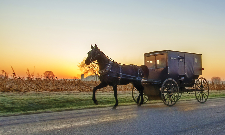 horse-drawn carriage in Amish country