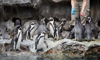 top zoos in the US