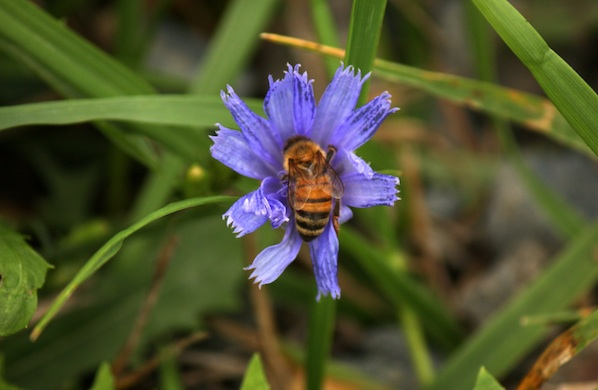 Beekeeping Tips from Krista Conner