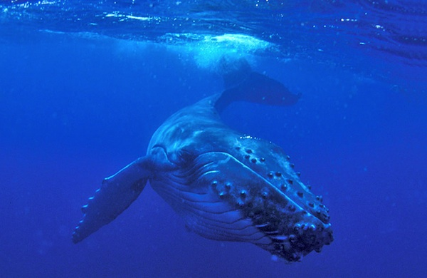 science-exhibits-were-most-excited-to-see-this-fall-_whale_600c390