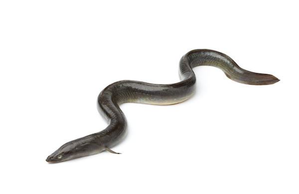 Yes, Bathing With Eels Is a Thing. Apparently It's Exfoliating.