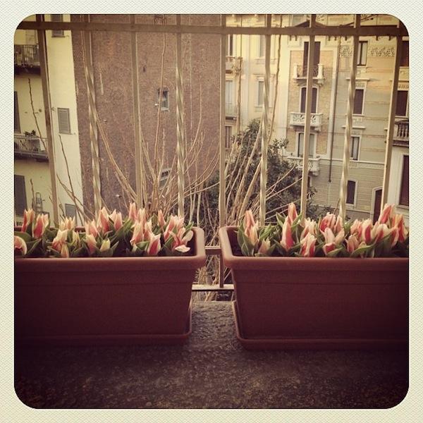 plantsitter Torino