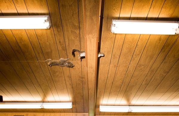 Squirrels beam