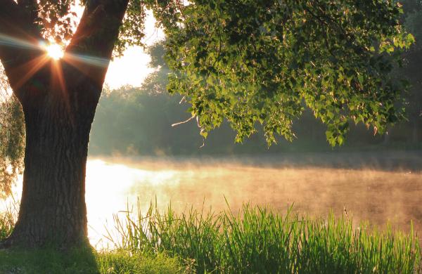 The Best Glasgow Parks for Summer Sunbathing