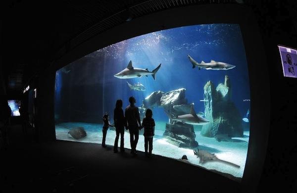 Acquario di Genova: informazioni e consigli per visitarlo