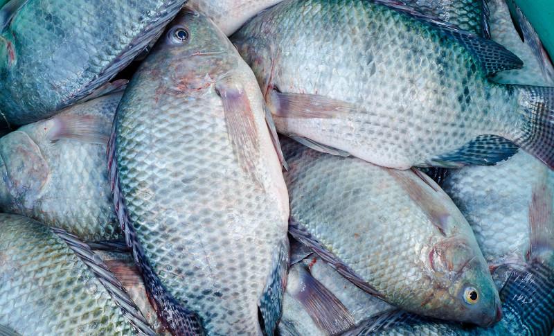 pesce venezia