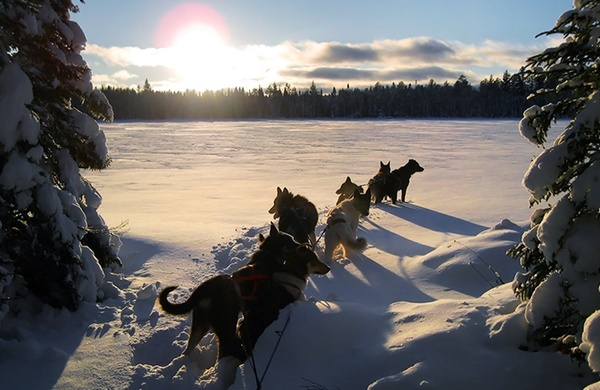 What s it Like to Lead a Dog Sledding Trip  sunset