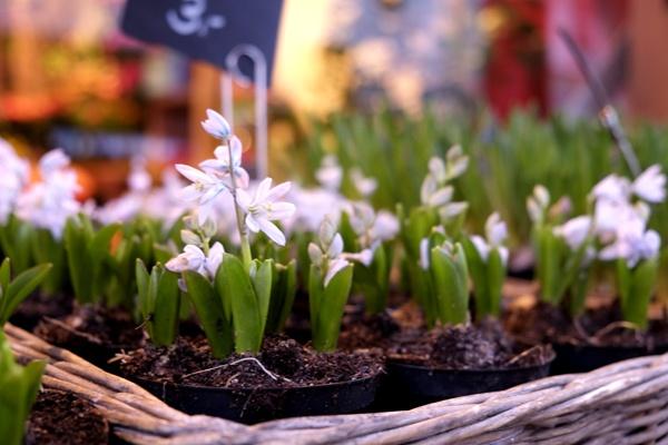 Blumen Schröder Hamburg