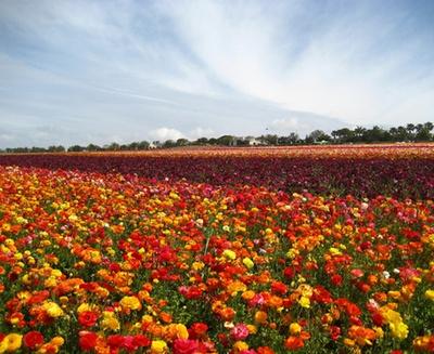 where to go for spring break carlsbad california