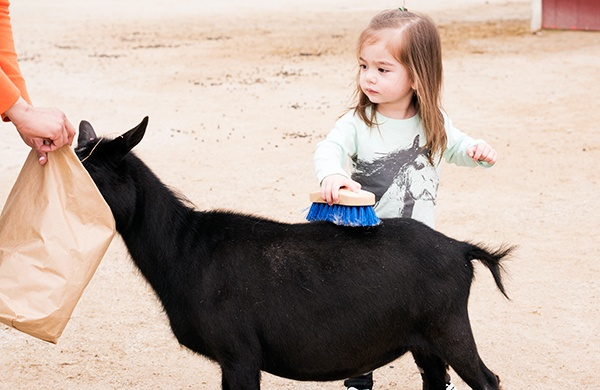 Tips for a Smooth Petting Zoo Visit  goat