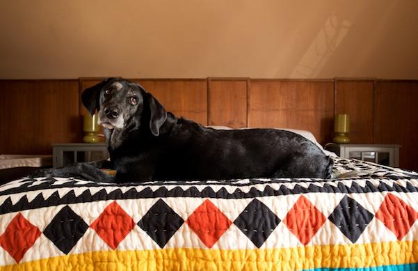 at-home-with-son-of-soren-designer-suzie-sorenson-and-artist-russ-white_dog_600c390