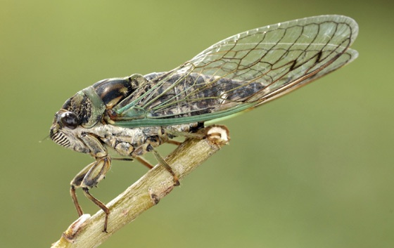 Once Every 17 Years: Cicadas at the Staten Island Museum