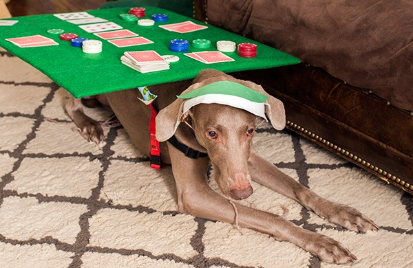 Poker for Dogs
