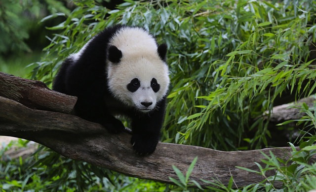 things-to-do-in-dc-september-6-to-september-12-zoo_600c390