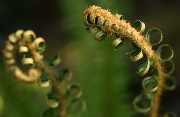 blogger_city_guide_seattle_nature_fern_600c390