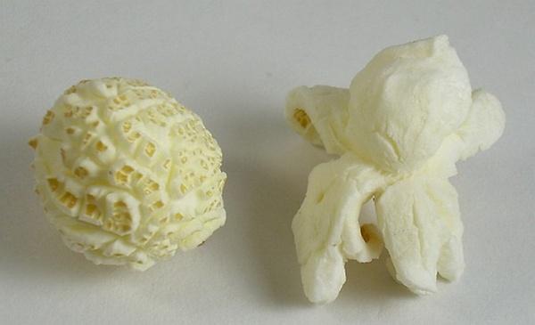 popcorn mushroom butterfly