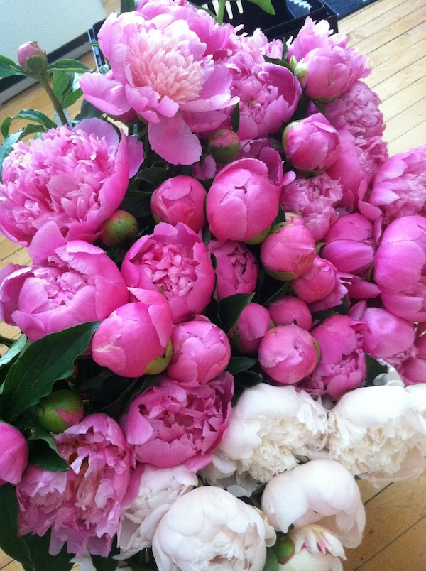 dont-buy-flowers-that-have-more-frequent-flyer-miles-than-you-do_peony_600c800