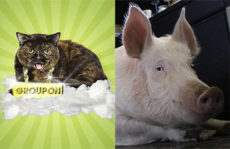 Groupon the Cat Interviews Esther the Wonder Pig About Veganism