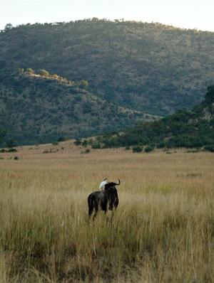 south africa safari 1