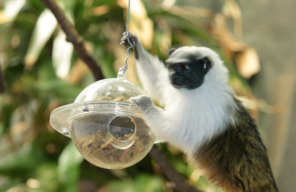Lincoln Park Zoo's Demon Monkeys, Naked Mole Rats, and Other Creepy Creatures