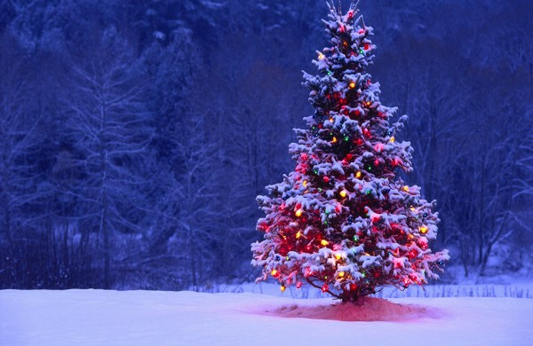 Come scegliere l'albero di Natale facendo attenzione all'ambiente