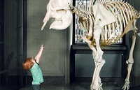 dinosaur bones and child
