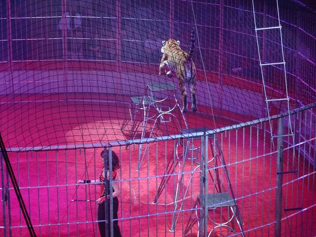 Cirque d Hiver