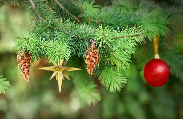 Como depurar el organismo en Navidad y Año Nuevo