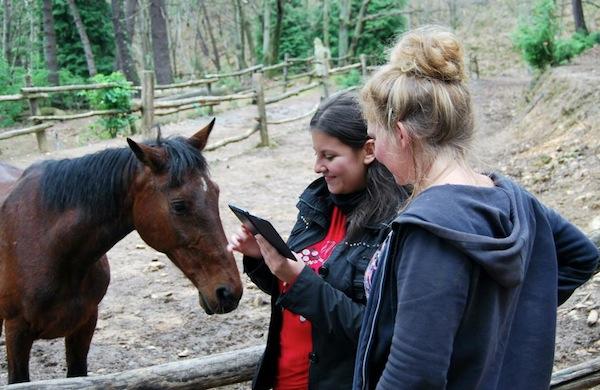 Mena e il cavallo