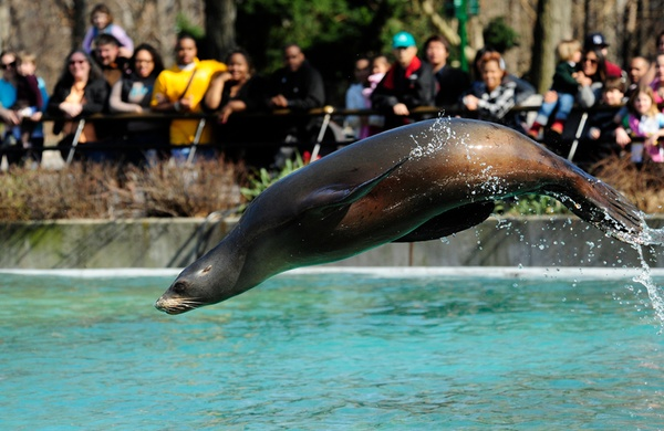 America s Best Zoos for Animal Photos sea lions