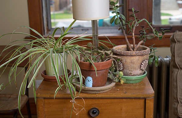 going-home-with-a-queen-kindie-rock_plants_600c390