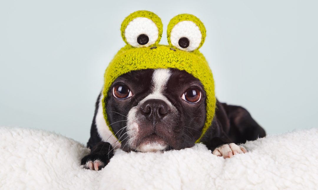 10 adorable halloween costumes for dogs