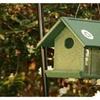 Songbird Essentials SERUBMWF100 Mealworm Feeder