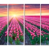 Blooming Tulips at Sunrise - Photo Metal Wall Art