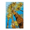 Roderick Stevens 'Aspen Sky' Canvas Art