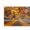 Kurt Shaffer 'Autumn Road' Canvas Art