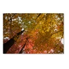 Kurt Shaffer 'Spectacular Brilliant Autumn Trees' Canvas Art