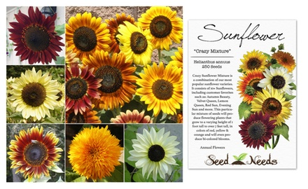 11 Off On Package Of 250 Seeds Sunflow Groupon Goods
